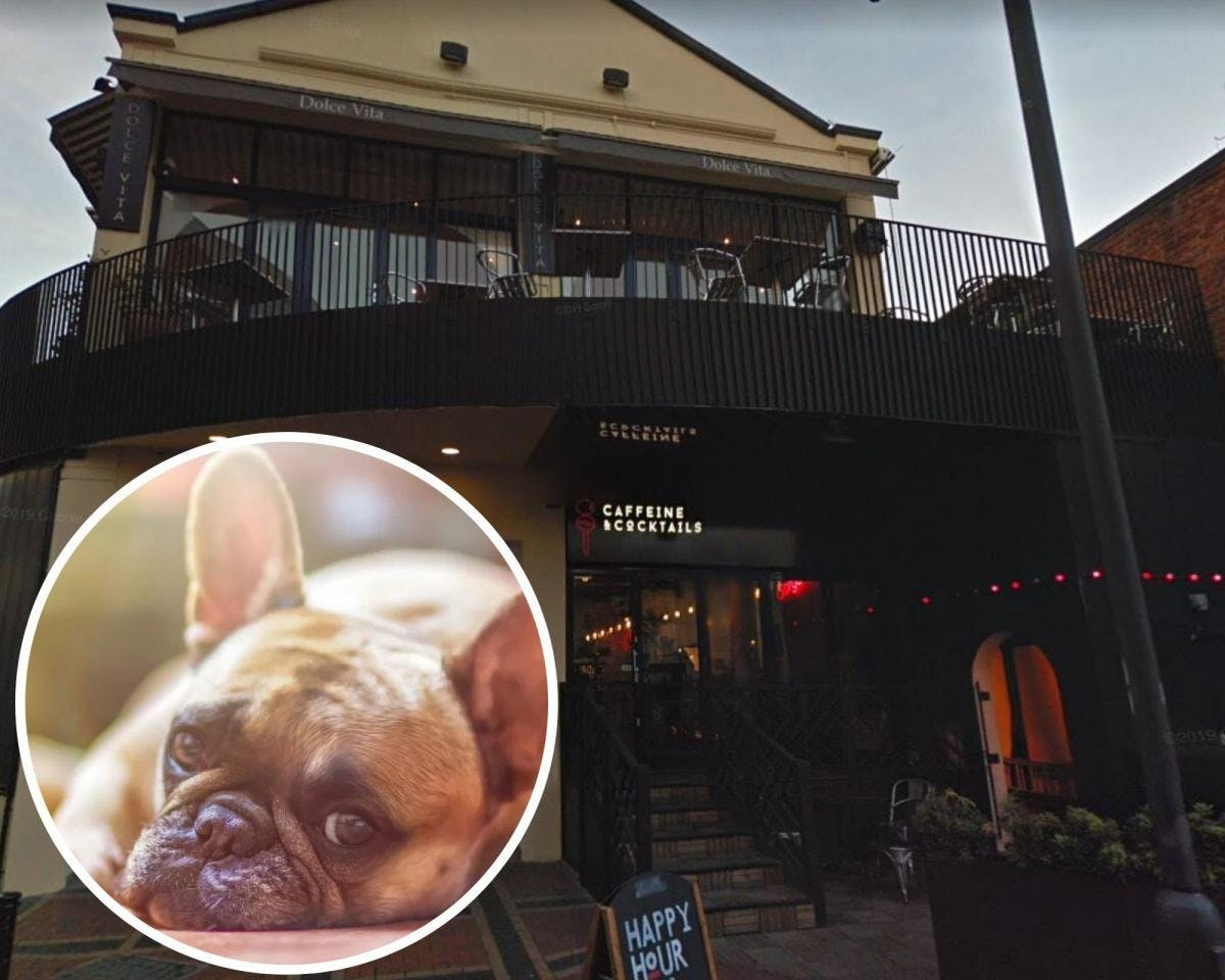 Reading's Caffeine and Cocktails to host 'Bulldog Brunch'