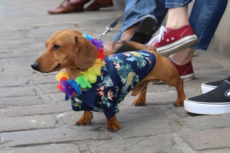 A pop-up café for sausage dogs is coming to Leeds