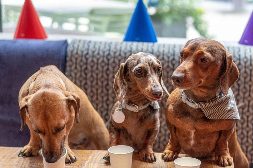 A dog café is coming to Liverpool with ball pits, fancy dress and puppuccinos