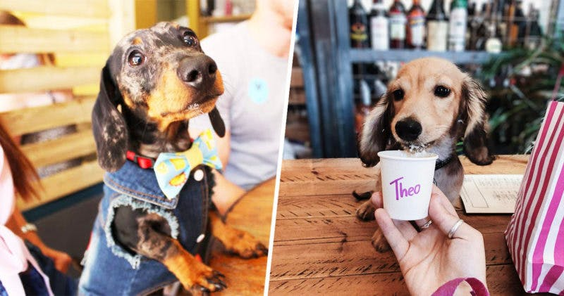 A dachshund cafe is coming to Manchester next month