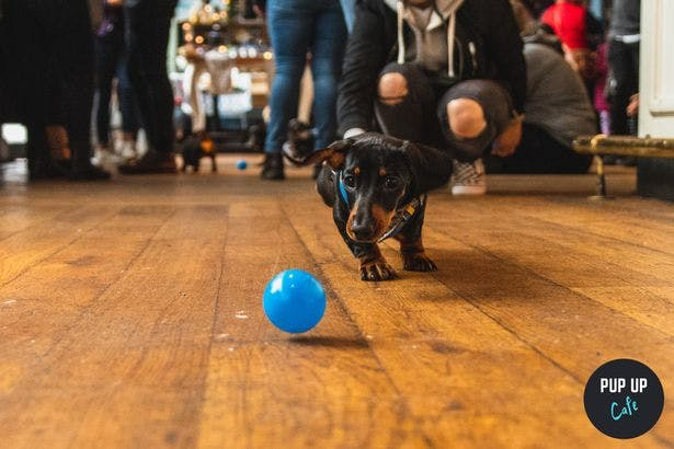 A Pop-up sausage dog cafe is coming to Digbeth