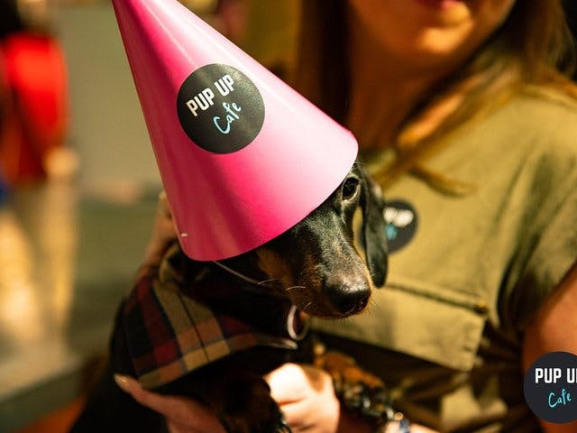 Sheffield cocktail bar hosting special party – for dozens of sausage dogs!