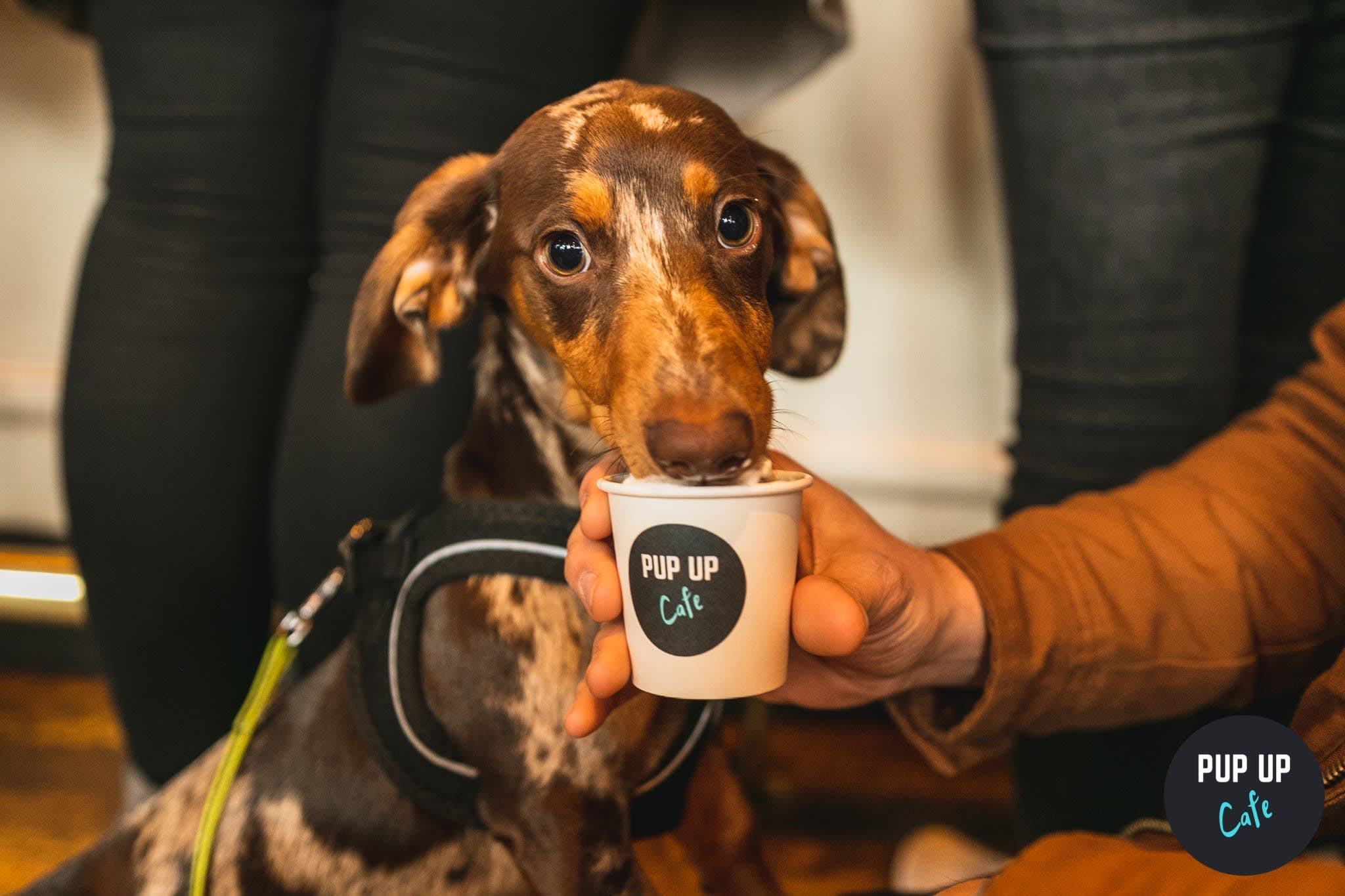 A sausage dog cafe could be coming to a place near you!