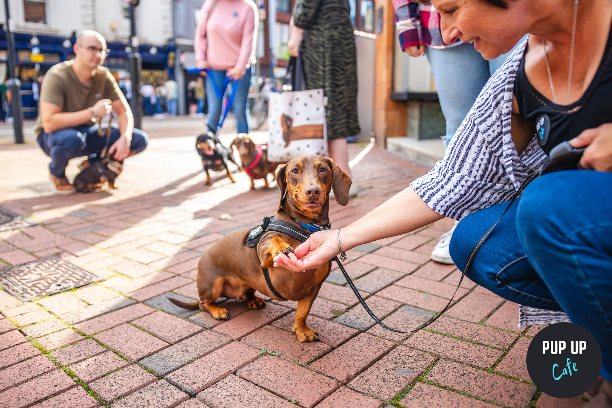 Pup Up Cafe™ brings 300+ Dachshunds to Glasgow bar!