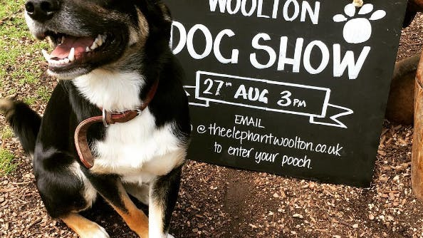 WHO LET THE DOGS OUT? THE WOOLTON DOG SHOW!